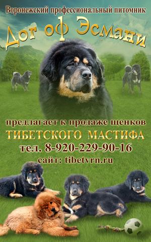 http://www.m-strazh.ru/assets/images/works/reklama_puppies/banner.jpg