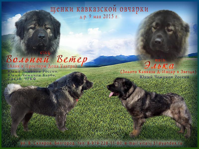 http://www.m-strazh.ru/assets/images/works/reklama_puppies/reklama_tor_elka.jpg